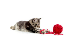 Tabby kitten with yarn Royalty Free Stock Photos