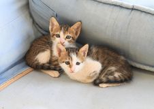 Tabby Kittens lizenzfreie stockbilder