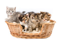 Tabby kittens Stock Photos