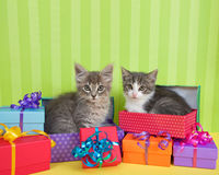 Tabby kittens in Birthday presents. Two month old tabby kittens peeking out of birthday present in a pile of brightly colored boxes with party hats, bright green Stock Photo
