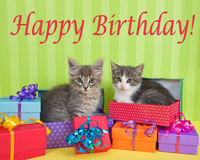 Tabby kittens in Birthday presents. Two month old tabby kittens peeking out of birthday present in a pile of brightly colored boxes with party hats, bright green Royalty Free Stock Image