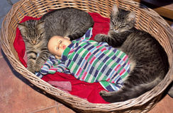 Tabby kittens. Two tabby kittens in a wicker basket Royalty Free Stock Photos