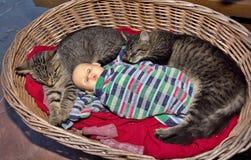 Tabby kittens. Two tabby kittens in a wicker basket Stock Image