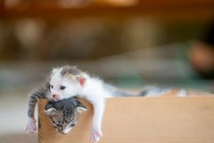 Tabby kittens in wooden box. Cute tabby kittens  in wooden box Royalty Free Stock Images