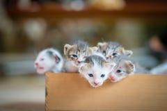 Tabby kittens in wooden box. Cute tabby kittens  in wooden box Royalty Free Stock Photo