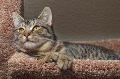 Tabby kot kłaść na miękkim brown łóżku zdjęcia royalty free