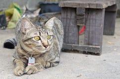 Tabby kot Kłaść na ziemi zdjęcia royalty free