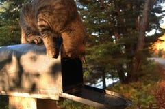 Tabby kot na skrzynce pocztowa Zdjęcie Stock