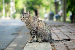 Tabby kot patrzeje co? na trawie w ogr obraz stock