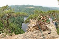 Tabby kot przy Vyhlidka Maj, Czechia Zdjęcie Stock