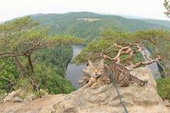 Tabby kot przy Vyhlidka Maj, Czechia Zdjęcia Royalty Free