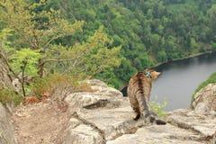 Tabby kot przy Vyhlidka Maj, Czechia Obrazy Stock