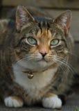 Tabby kot w ogródzie Zdjęcia Stock