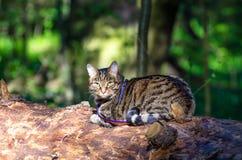 Tabby kot w plecy jak dżungli lasowa zieleń fotografia stock