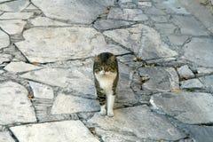 Tabby kot zostaje na brukującej ziemi fotografia stock