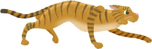 Tabby kota czajenie Obraz Royalty Free