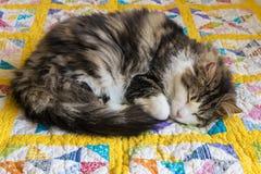 Tabby kota dosypianie fryzował w górę żółtej patchwork kołderki na obrazy royalty free