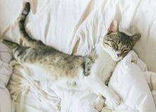 Tabby kota dosypianie na łóżku w domu Zdjęcia Stock
