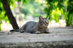 Tabby kota obsiadanie na pod?odze w ogr?dzie obraz royalty free