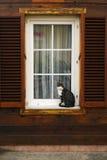 Tabby kota obsiadanie Przy Outside okno Obraz Stock