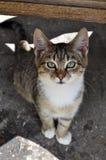 Tabby kota odgórny widok Zdjęcia Stock