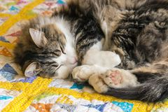 Tabby kota odpoczywać fryzuję up na kolor żółty kołderki pokrywie zdjęcia stock