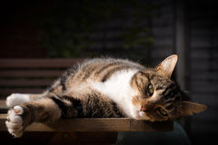 Tabby Lying On Garden Table Fotografia de Stock Royalty Free