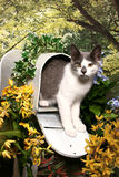 Tabby in a Mailbox Stock Images