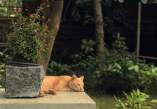 Tabby Orange Cat im Garten Lizenzfreie Stockfotografie