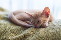 Tabby orange kitten sleeping at home Royalty Free Stock Photography