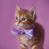 Tabby red kitten Stock Images