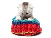 Tabby scottish fold cat in a towel on a light background Royalty Free Stock Photos