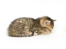 Tabby sleeping stock photo