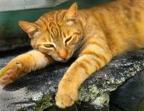 Tabby Street Stray Cat Sleeping anaranjada abandonada imagen de archivo