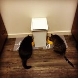 Tabby striped and black house cats eat. Two cats eat from food bowls on the floor separated by a container Royalty Free Stock Photos