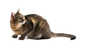 Tabby surprised cat Stock Photos