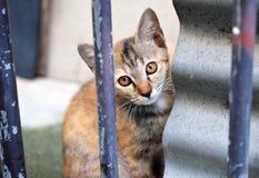 Tabby thai kitten.  outdoors Stock Photos