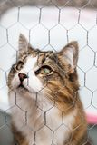Tabby and white cat looking up behind a metal fence. A tabby and white cat looking up behind a metal fence Stock Photos