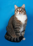 Tabby and white cat with sick eyes sitting on blue Royalty Free Stock Image
