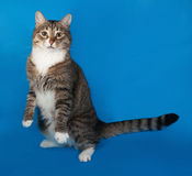 Tabby and white cat with sick eyes sitting on blue Royalty Free Stock Images