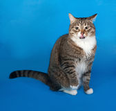Tabby and white cat with sick eyes sitting and licked on blue Stock Images