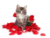 Tabbykätzchen umgeben durch Rosen. Lizenzfreies Stockbild