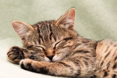 Tabbykatze, die auf Bett liegt Lizenzfreies Stockbild