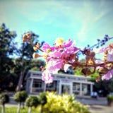 Tabek kwiat Obrazy Stock