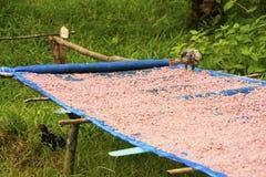 A tabela com camarão secado na vila local, alarga o parque nacional, Ca imagem de stock royalty free