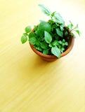 Tabela de madeira e planta verde fotos de stock