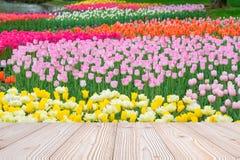 A tabela de madeira vazia com fundo colorido da flor da tulipa na estação de mola, zomba acima para sua exposição ou montagem do  fotografia de stock royalty free