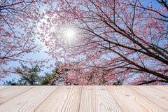 Tabela de madeira vazia com fundo cor-de-rosa bonito da flor da flor de cerejeira na estação de mola, no kawaguchiko do lago, Yam fotografia de stock