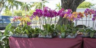 Tabela do negócio com flores Foto de Stock Royalty Free