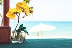 Tabela do restaurante com a flor da orquídea no café tropical da praia com fundo borrado durante feriados da praia foto de stock